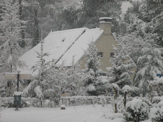 waldhuske98 in de sneeuw